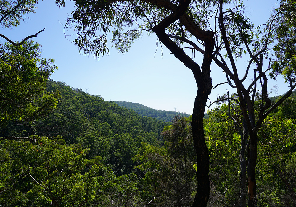 Berowra Valley National Park, Galston